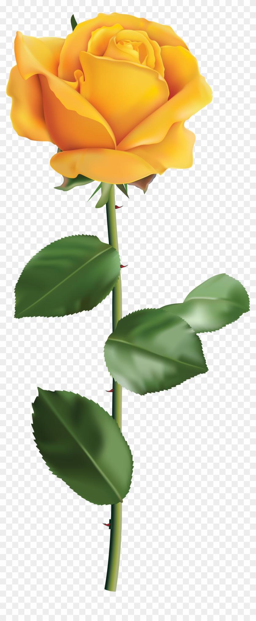 Yellow Rose Transparent Png Clip Art Image.