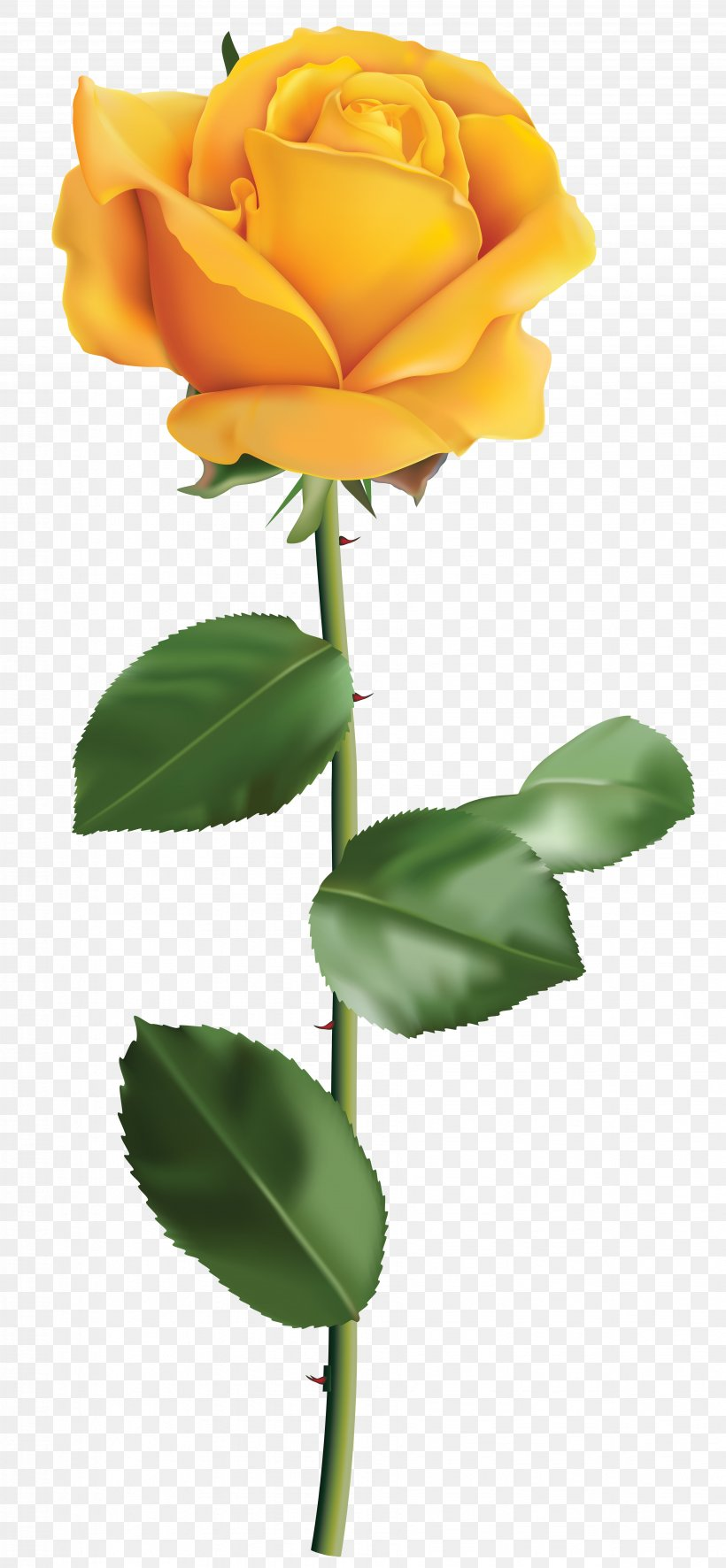 Rose Yellow Flower Clip Art, PNG, 3702x8000px, Rose, Bud.