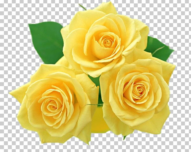 Flower Yellow Rose PNG, Clipart, Clip Art, Cut Flowers.