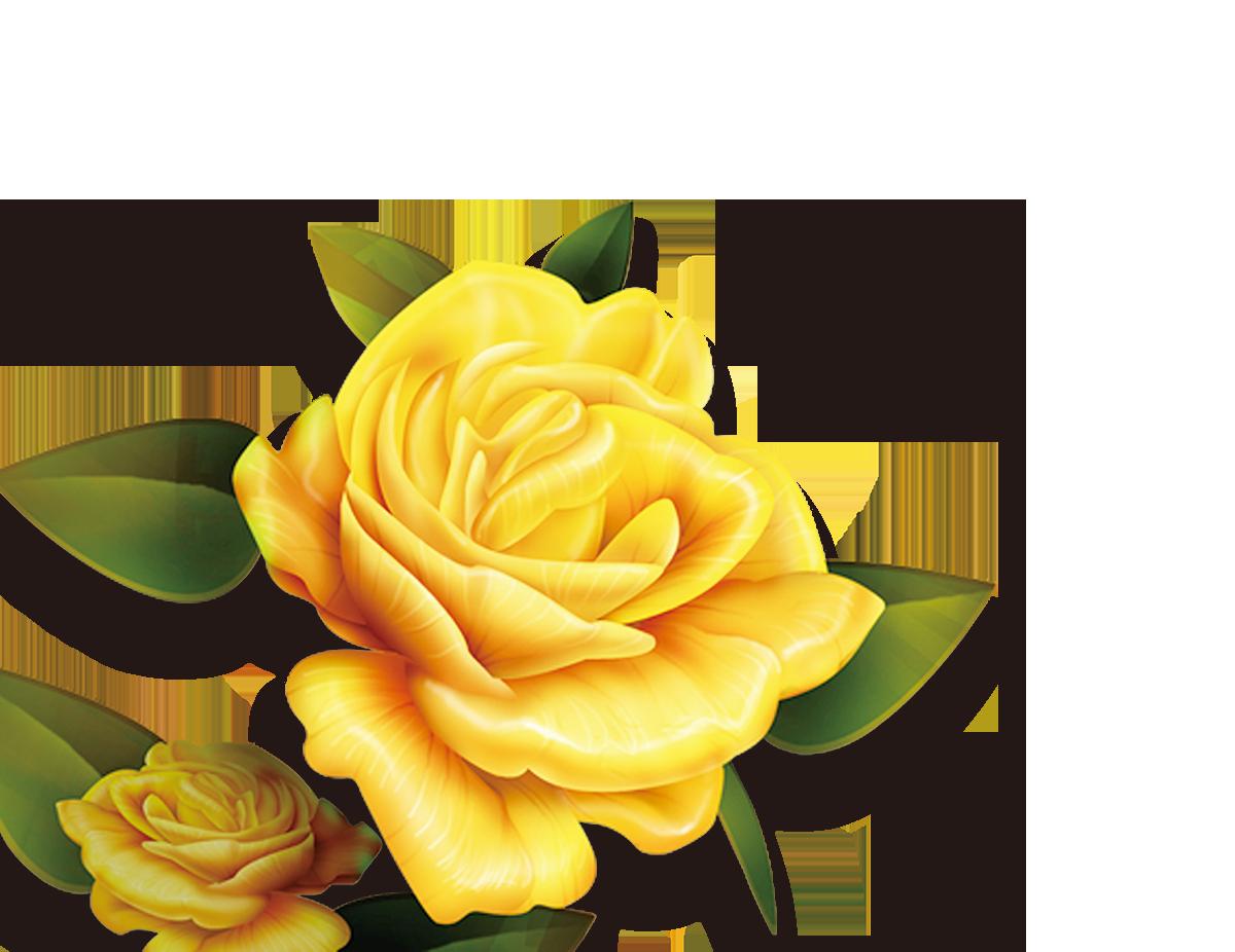 Rose Yellow Flower High.