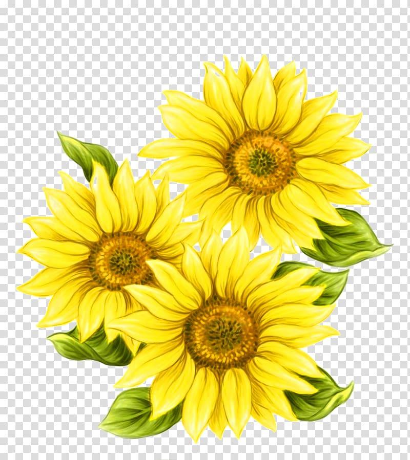 Yellow flowers, Watercolor painting Common sunflower, Yellow.