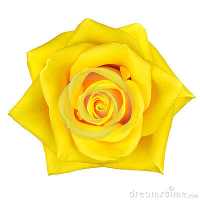 Yellow rose images clipart.