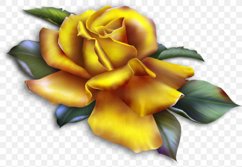 Rose Yellow Clip Art, PNG, 1024x705px, Rose, Cut Flowers.