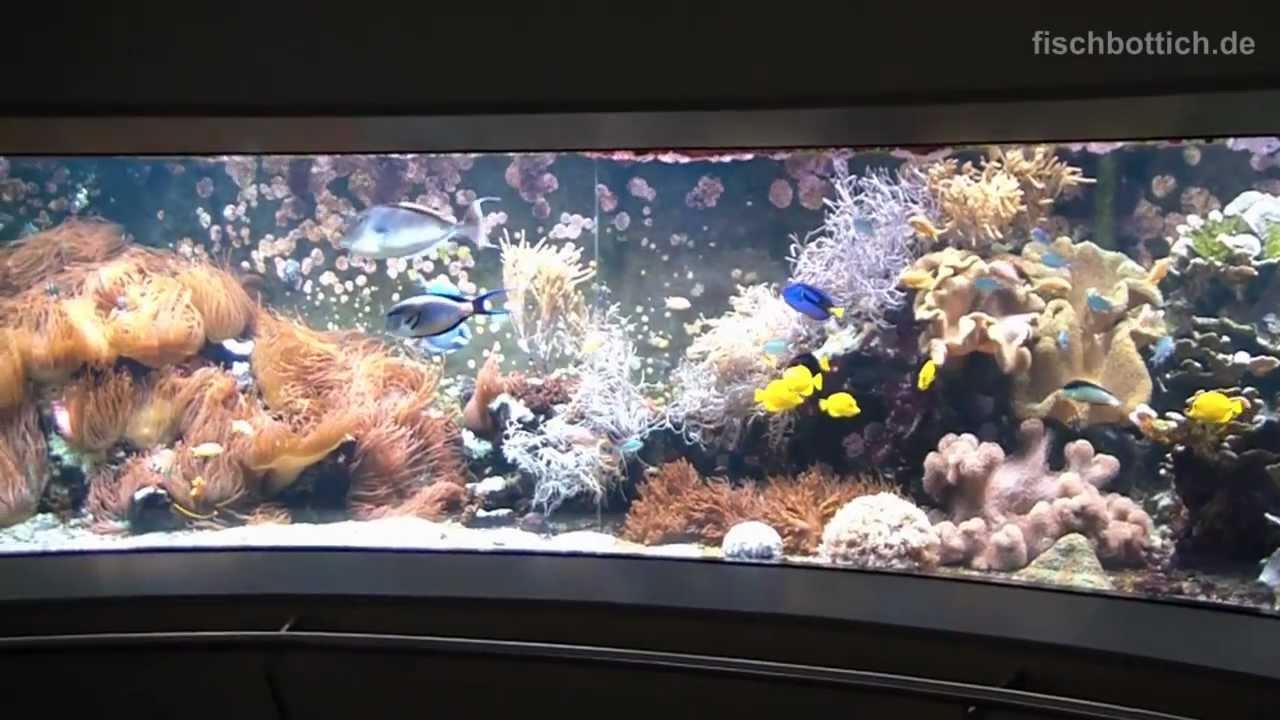 HD] Never ending 200° Panorama Tropical seawater reef tank.