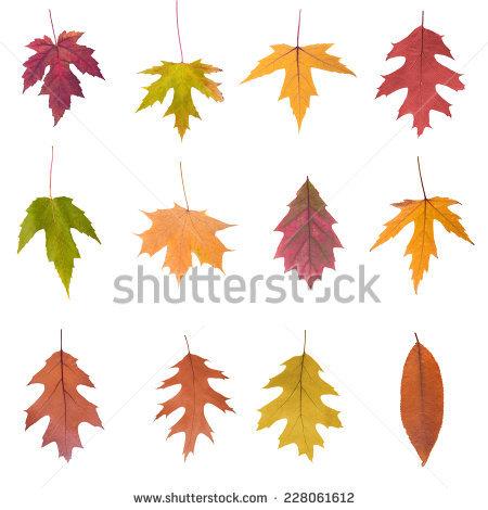 Leaf yellow colour free stock photos download (6,067 Free stock.