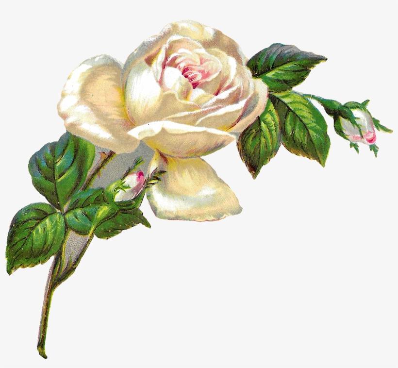 White Rose Shabby Chic Flower Image Clip Art Banner.