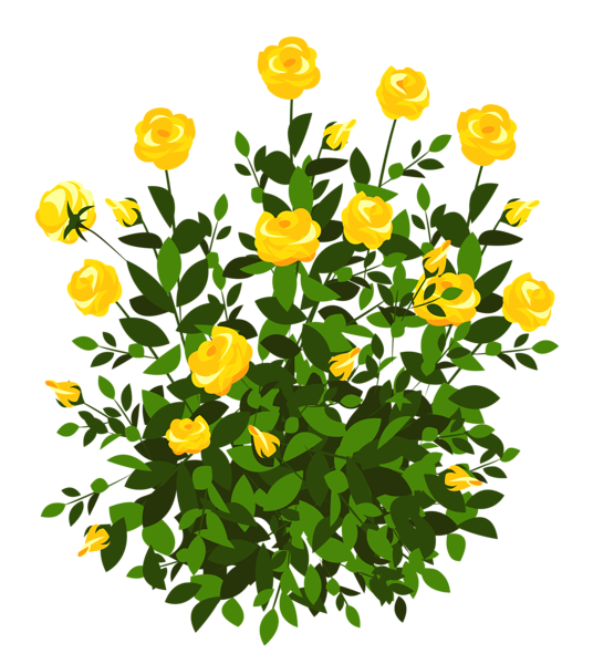 Yellow Rose Bush PNG Clipart Picture.