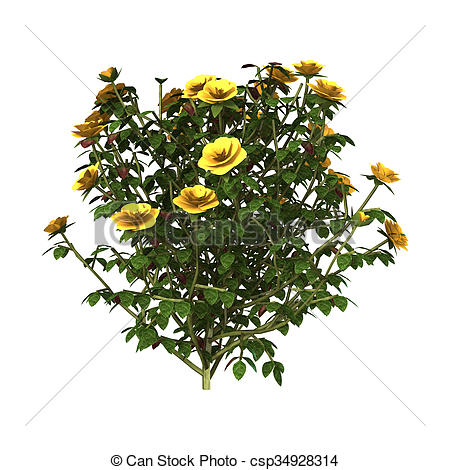Clipart of Yellow Rose Bush.