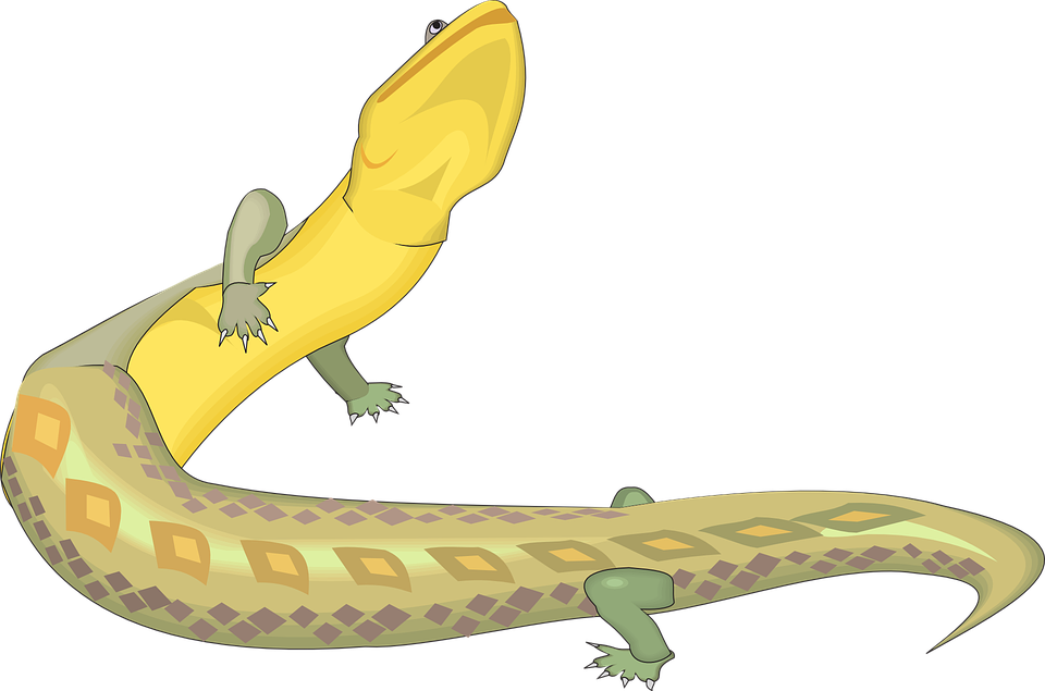 Free vector graphic: Lizard, Green, Yellow, Reptile.