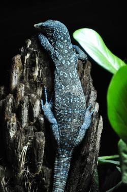 Free pictures TREE MONITOR.