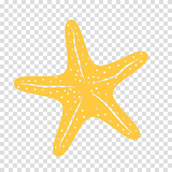 Yellow starfish , Starfish Invertebrate Sea , star fish.