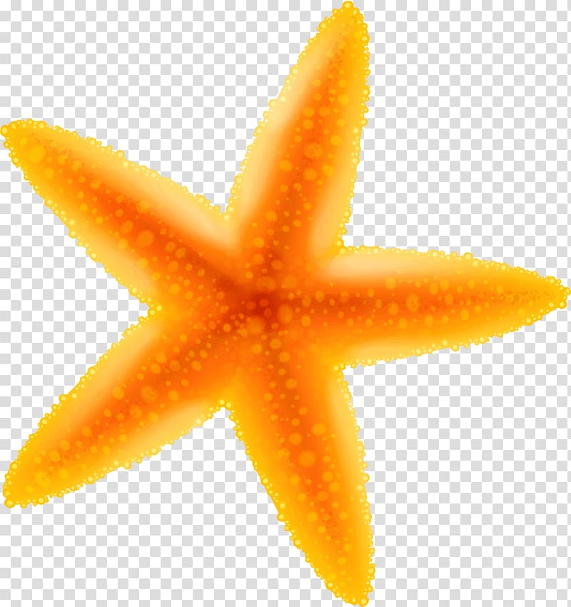 Yellow cartoon starfish transparent background PNG clipart.