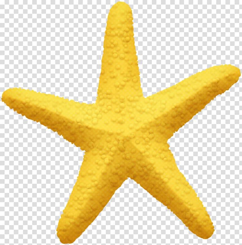 Starfish Pentagram Yellow Five.