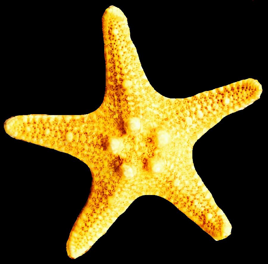 Starfish clipart yellow, Starfish yellow Transparent FREE.
