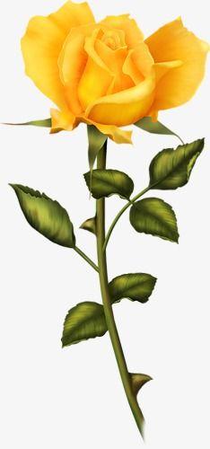 Yellow Rose in 2019.
