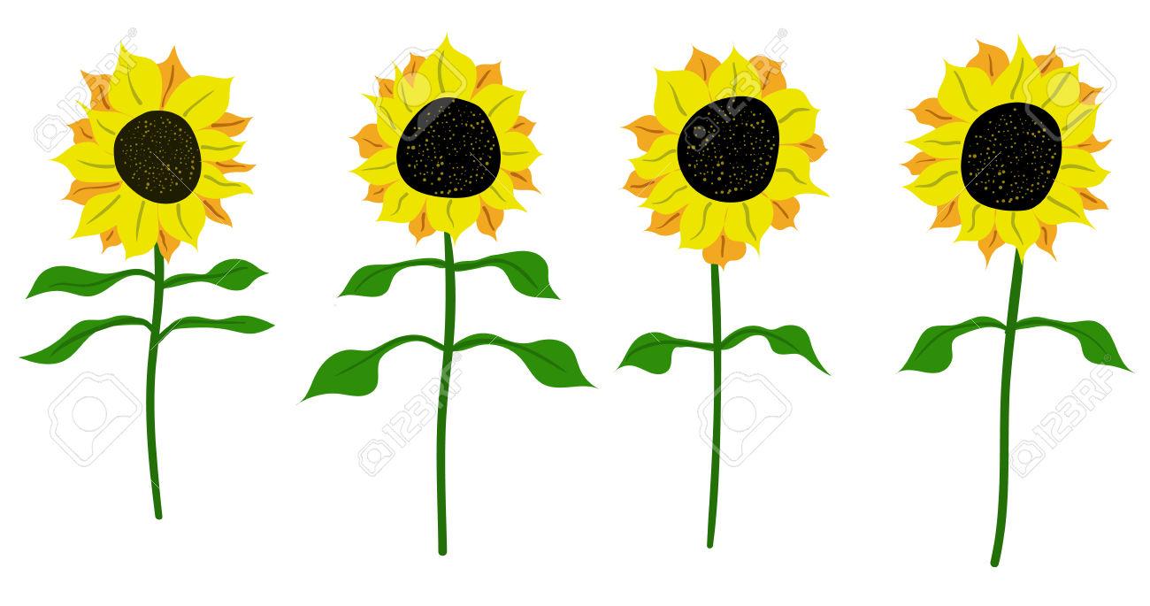 Sunflower Vector Flower Pedicle Nature Illustration Yellow Summer.