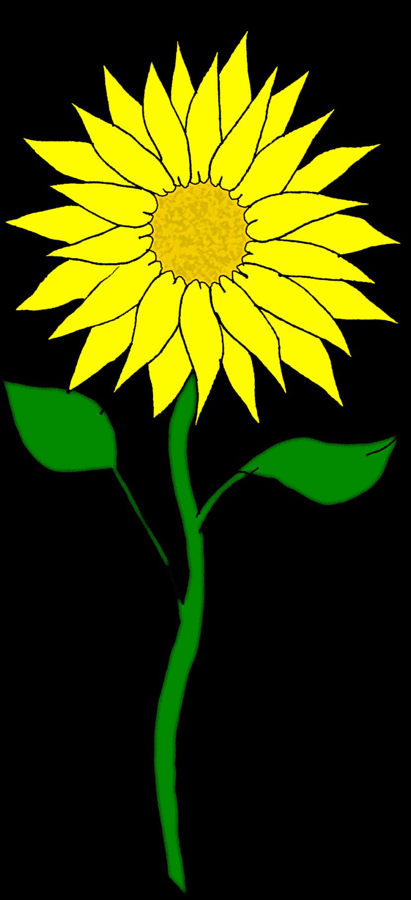 Best Sunflower Clipart #26347.