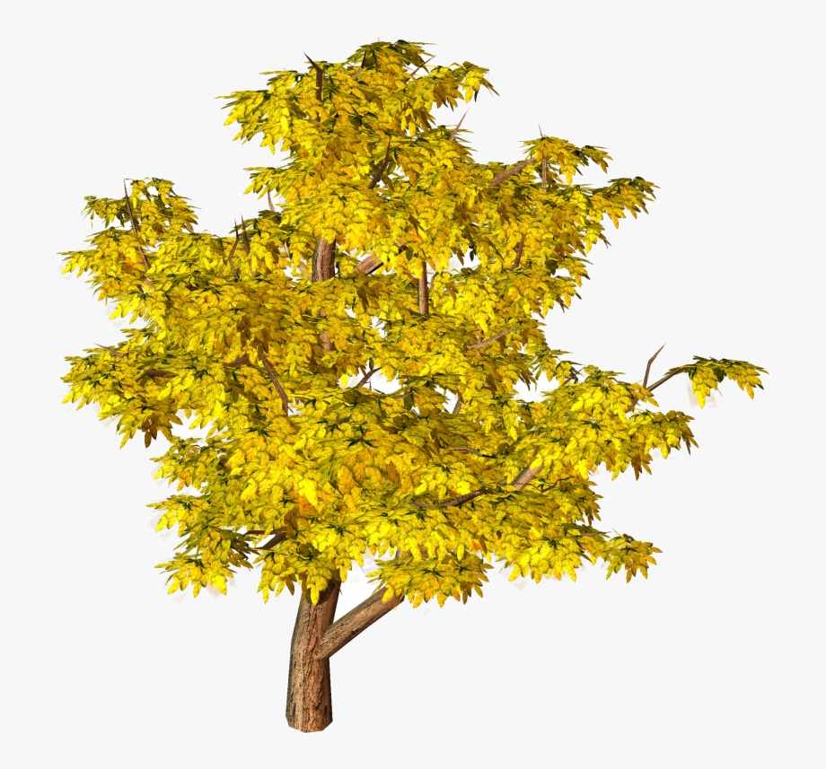 Fall Tree Trees Top View Yellow Clipart Hd Background.