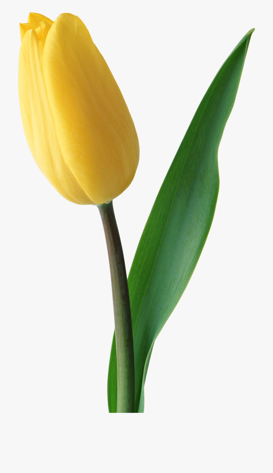 Clipart Free Library Yellow Png Image Flowers.