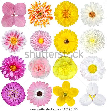 Closeup Petals Sunflowers Stock Photos, Royalty.