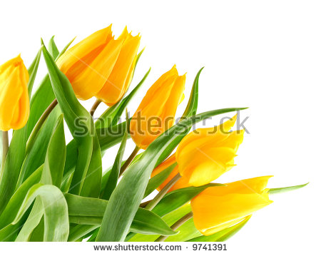 """bottom Of Tulips"" Stock Photos, Royalty."