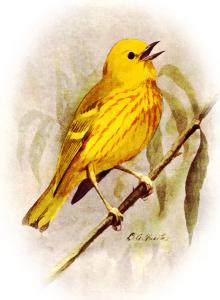 Yellow Bird Clip Art Download.