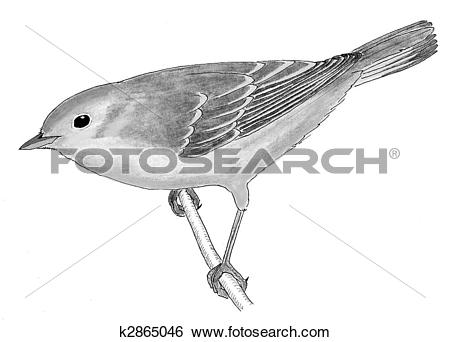 Stock Illustration of Yellow Warbler k2865046.