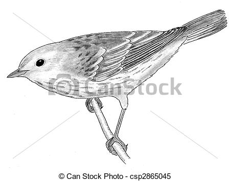 Stock Illustrations of Yellow Warbler.