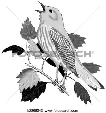 Drawing of Yellow Warbler k2865043.