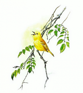 Yellow Bird Clip Art Download.