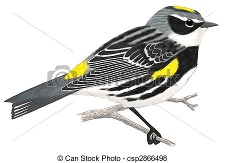 Warbler Stock Illustration Images. 252 Warbler illustrations.