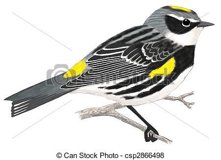 Warbler Stock Illustration Images. 252 Warbler illustrations.