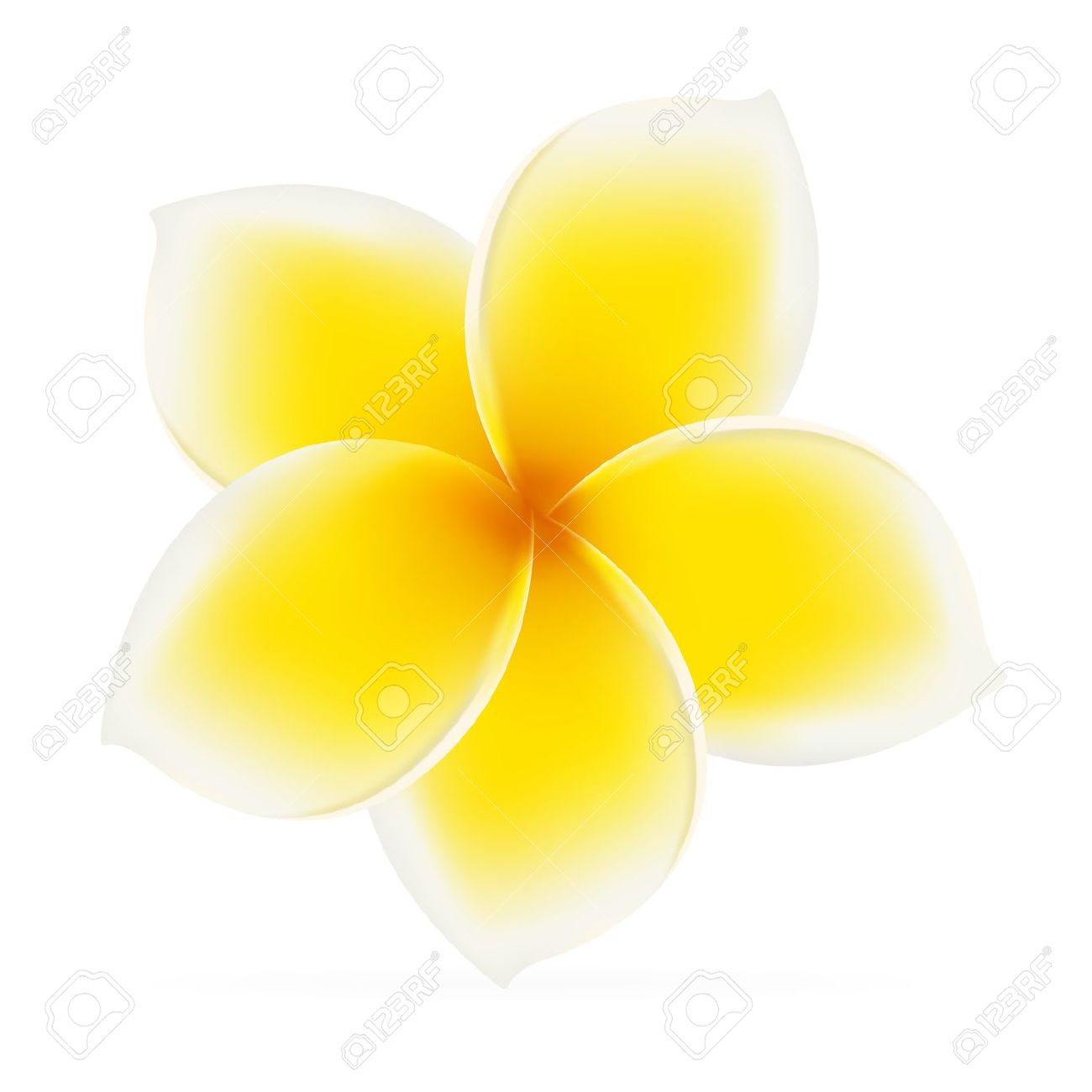Frangipani. Asian Yellow Flower. Vector Illustration On White.