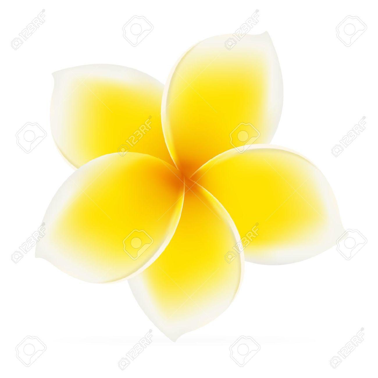Frangipani. Asian Yellow Flower. Vector Illustration On White.