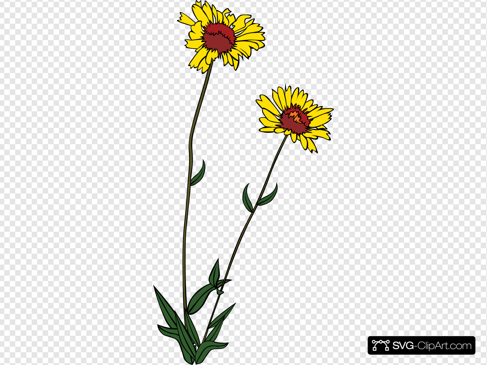 Yellow Wild Flower Clip art, Icon and SVG.