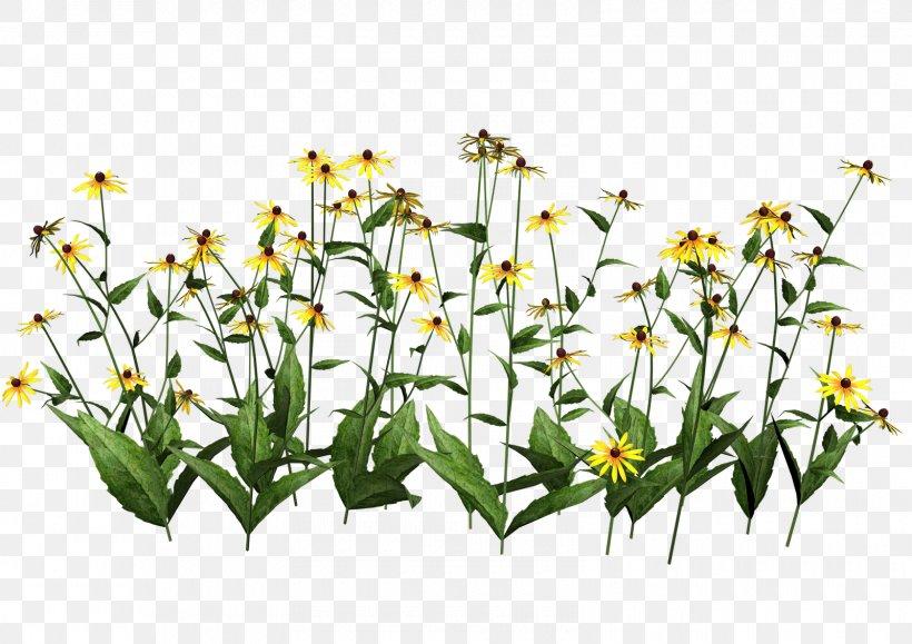 Plant Flower Clip Art, PNG, 1600x1131px, Flower, Botany, Cut.