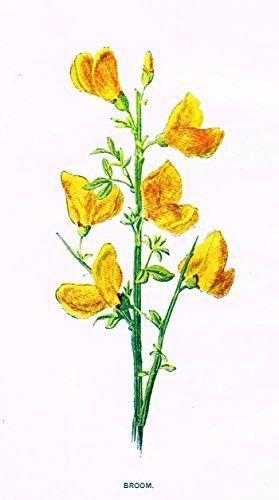 Hulme\'s Familiar Wild Flowers.
