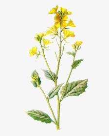 Field Clipart Field Wildflower.