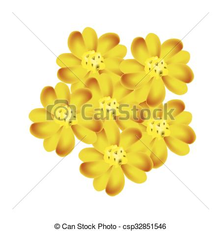 EPS Vector of Yellow Yarrow Flowers or Achillea Millefolium.