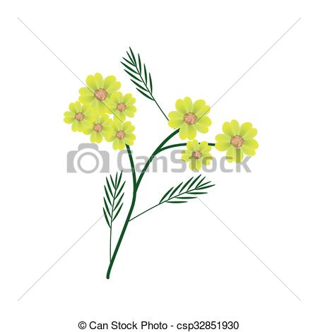 Vectors of Blossoming of Yellow Yarrow Flowers or Achillea.