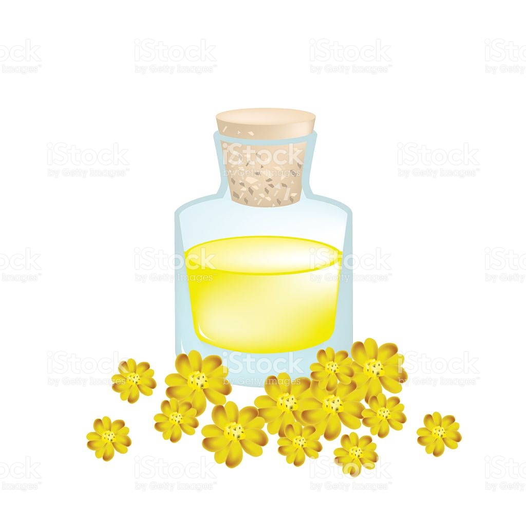 Yellow Yarrow Or Achillea Millefolium With Essential Oil stock.