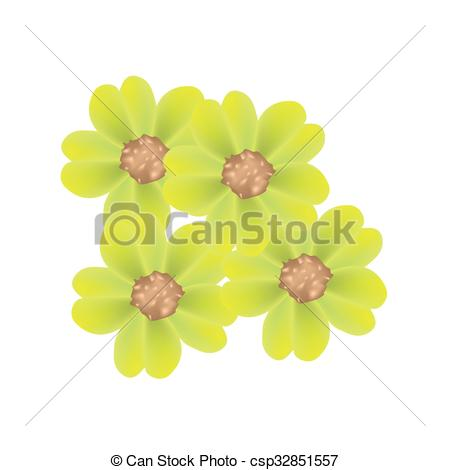 Clipart Vector of Fresh Yellow Yarrow Flowers or Achillea.