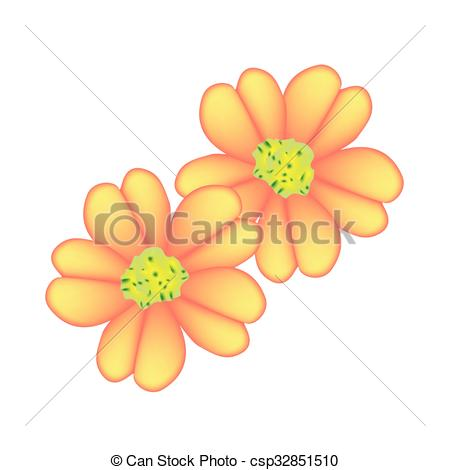 Vector Clip Art of Orange Yarrow or Achillea Millefolium Flowers.
