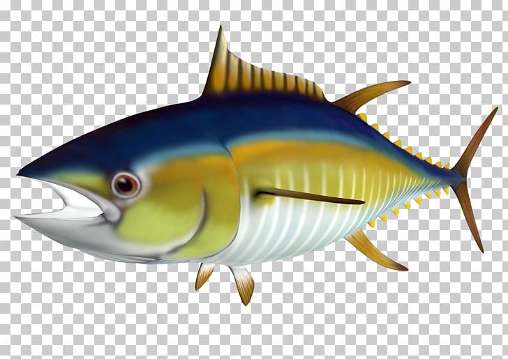 Atlantic bluefin tuna Yellowfin tuna , Tuna s PNG clipart.