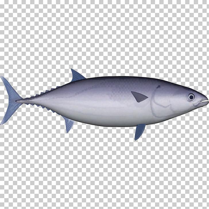 True tunas Skipjack tuna Yellowfin tuna Pelagic fish Mahi.