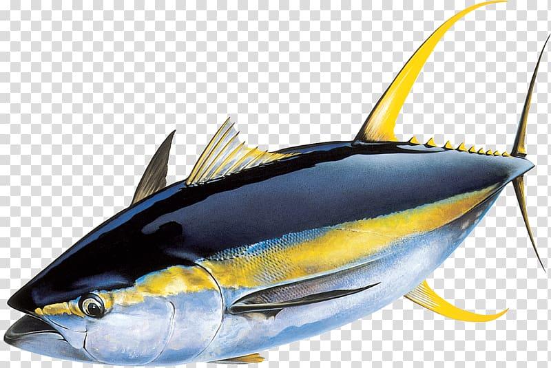 Tuna illustration, Yellowfin tuna Atlantic bluefin tuna.
