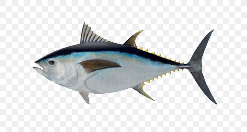 Bigeye Tuna Southern Bluefin Tuna Albacore Atlantic Bluefin.