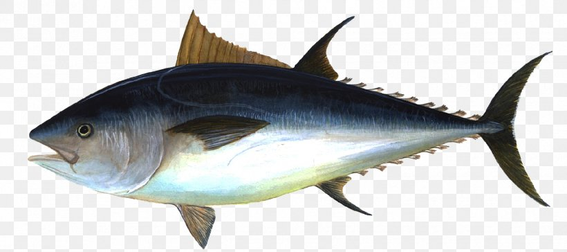 Albacore Bigeye Tuna Pacific Bluefin Tuna Atlantic Bluefin.