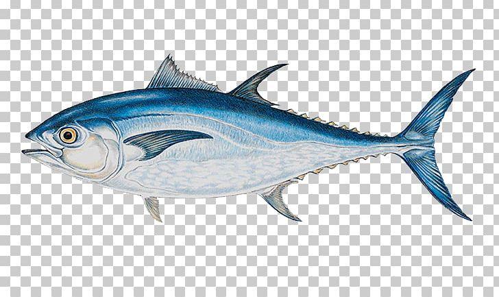 Atlantic Bluefin Tuna Yellowfin Tuna Big.