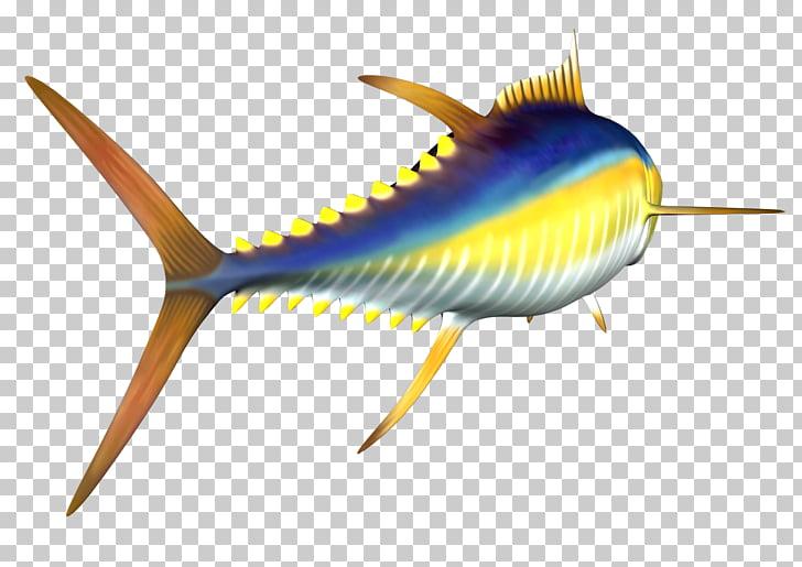 Yellowfin tuna Atlantic bluefin tuna , Free High Resolution.